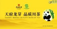 【关注】四川精制川茶产业瞄准千亿着力推动全产业链发展