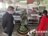 """新开局奋战2021④丨川红小镇茶产业""""牛""""气冲天喜获丰收"""