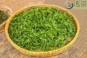 绿茶有哪些品种?中国顶尖的五大绿茶,你喝过几种?