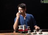 新手应该如何选择福鼎白茶?