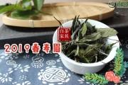 多数人买到劣质白茶的原因,是从选茶只看价格开始