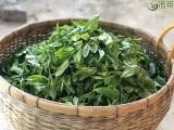 揭秘古树茶好喝的秘诀是什么?