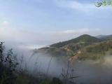 【艺霖轩·千年古树茶】资讯分享:茶味初相——云南千年古树茶