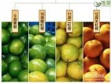 二红柑正当时添福雅茗2020年二红皮上市