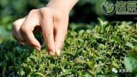 茶叶总共分几种?根据什么方式来区分的?