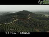 聚焦茶企发展助力春茶生产