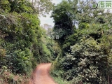 寻茶记秘境犀牛塘,古茶树在密林深处